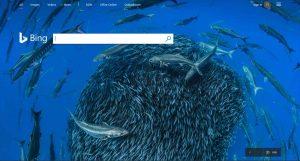 ตัวอย่าง Search Engine Bing